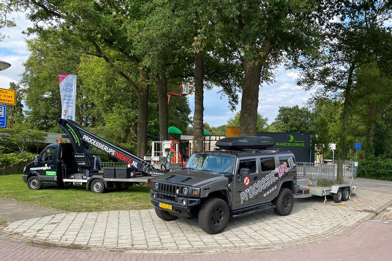 processierups oost nederland